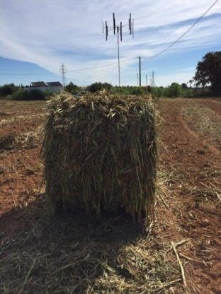 Crecen los biocultivos en Cambrils