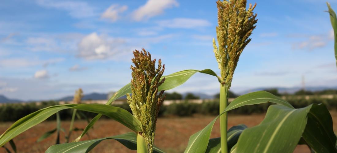 Crecen los biocultivos en la Coop. Cambrils
