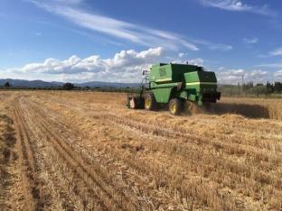 Gran resultado de la cosecha triticale en Cambrils